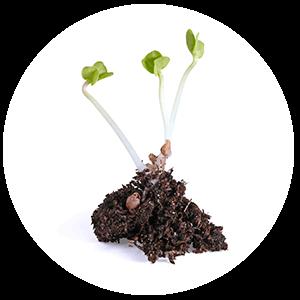 Digestión Anaerobia. Biodegradación Biopolímeros.