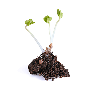 Anaerobic Digestion INZEA NUREL Biopolymers & compostability