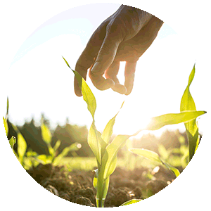 NUREL Biopolymers INZEA